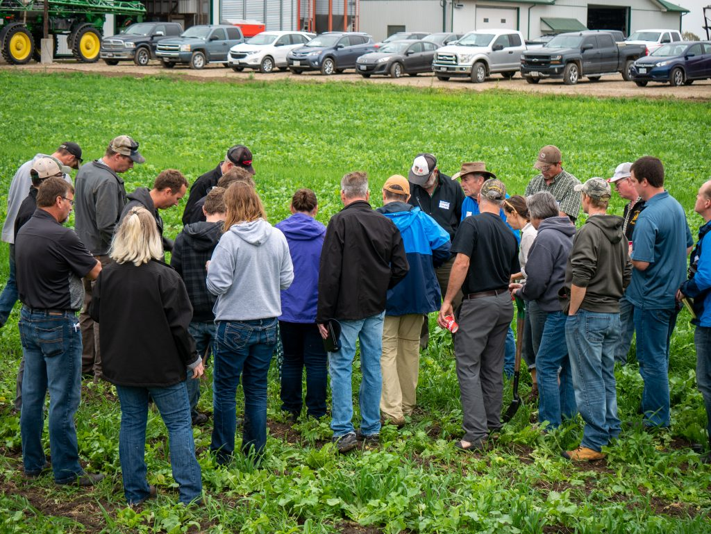 Group of farmers looking at cover crops in a field