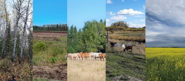 Three different land uses: forest, arable, and pasture