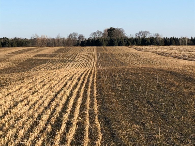 Field with strips of cover crops after the winter
