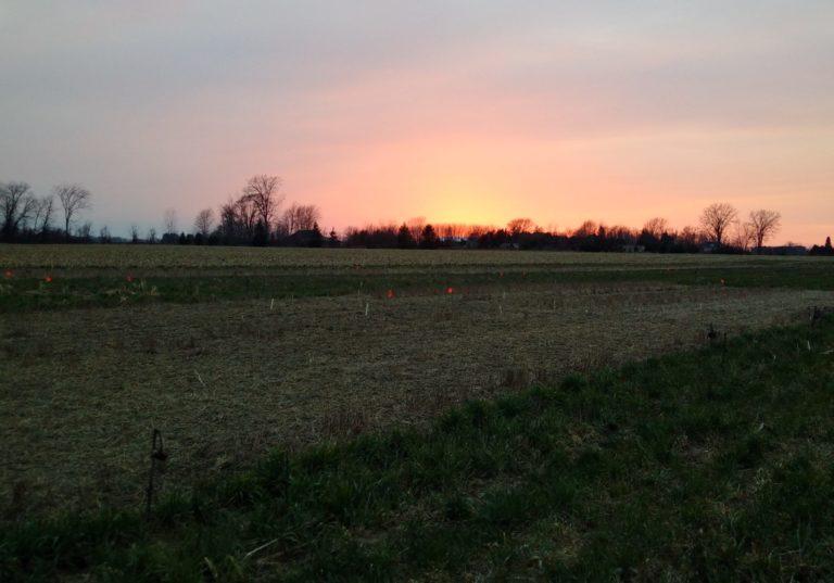 Sunrise over a farm field