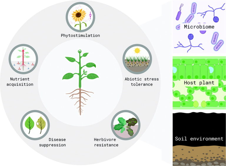 Figure showing the connection between plants, soil, and the microbiome for phytostimulation, nutrient acquisition, disease suppression, herbivore resistance, and abiotic stress tolerance
