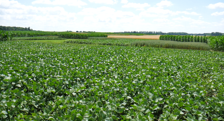 View of the crop rotation experimental plots at the Elora Crops Research Centre